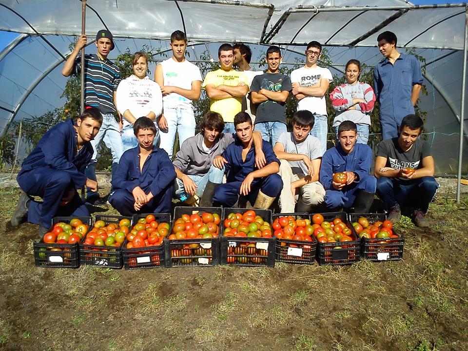 Record de Produção de Tomate 7000 kg