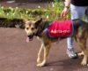 EPISJ colabora na Campanha de Adoção Animal