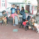 Campanha de Adoção Animal – Adote um amigo!