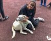 Campanha de Adoção Animal 2019 – Canil Municipal das Velas